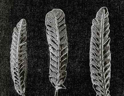 white feather against black background